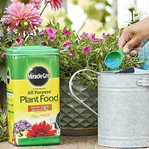 Miracle-Gro All Purpose Plant Food (5lbs)