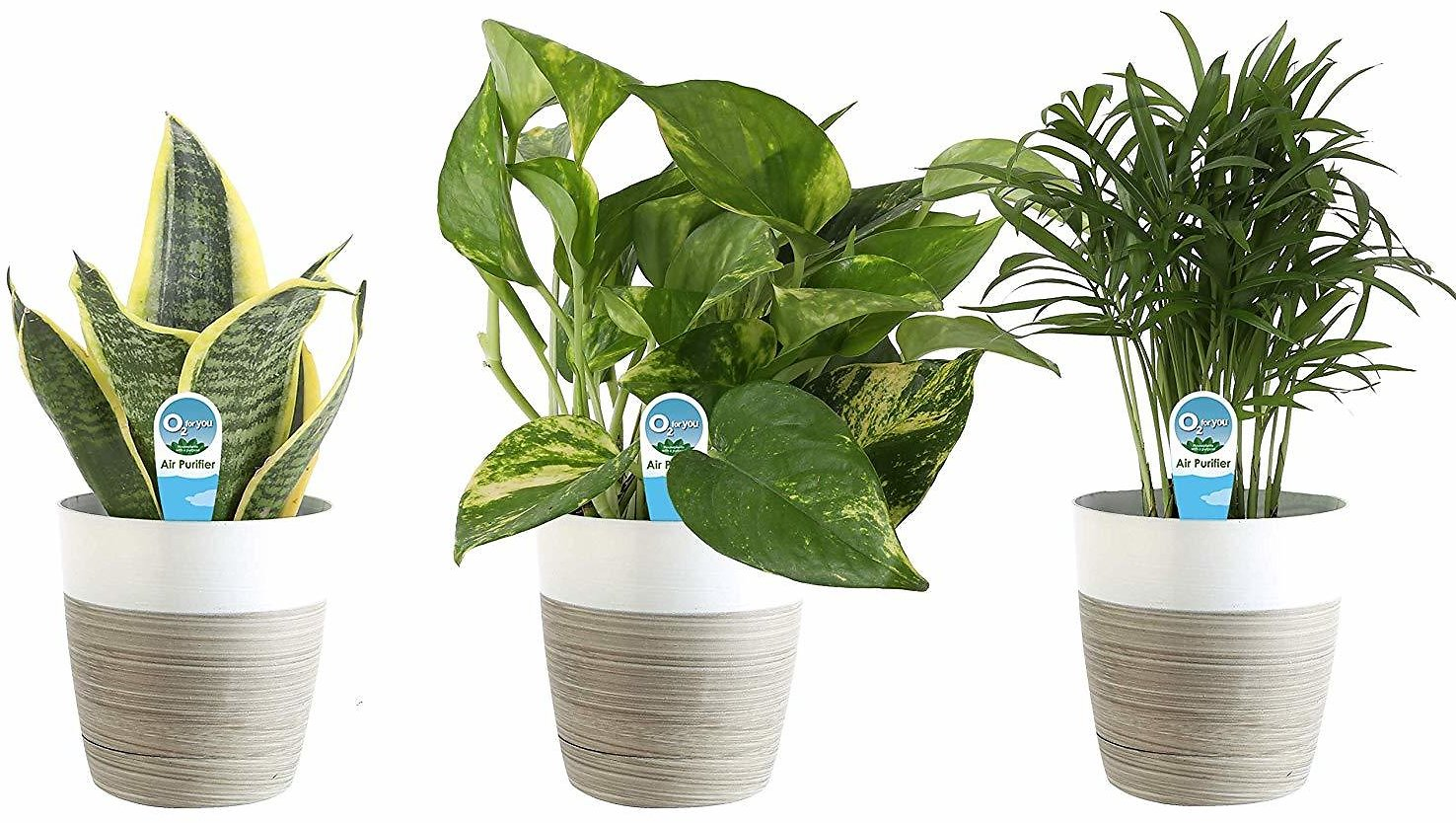 Save Up to 30% On Indoor Live Plants