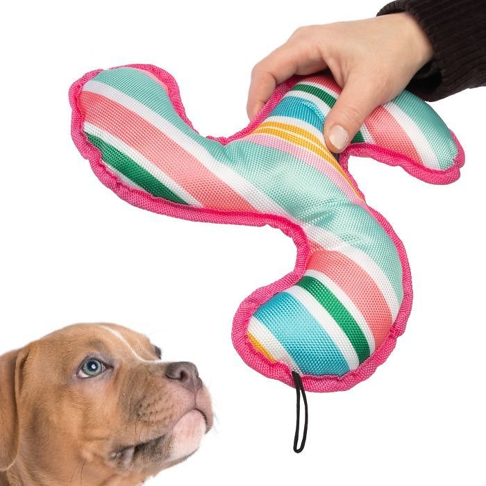 Bow Wow Pet Boomerang Dog Toy – With Squeaker, Chew & Fetch!