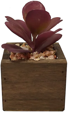 SONOMA Goods for Life® Purple Succulent Plant In Wood Pot