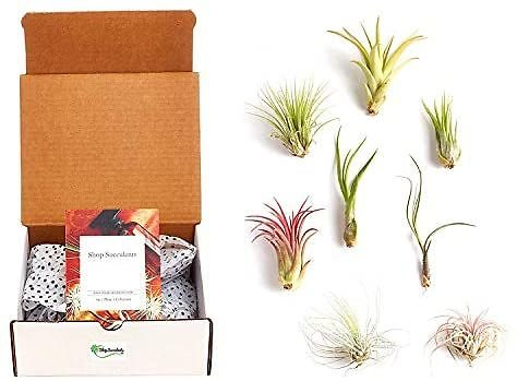 Hand Selected Variety of Species, Purifying Live Indoor Air Plants, 8-Pack