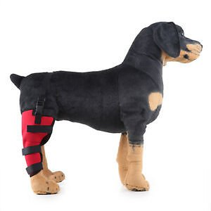 Puppy Dog Leg Brace Hock Joint Knee Support Right Hind Leg-Red S Pet Supplies