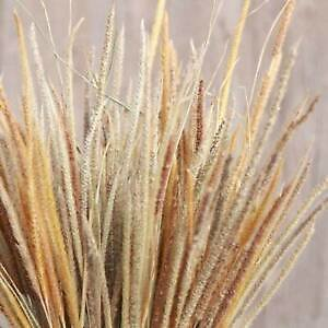 50x Real Dried Thousand Grass Reed Flower Bunch Wedding Bouquet Home Decors