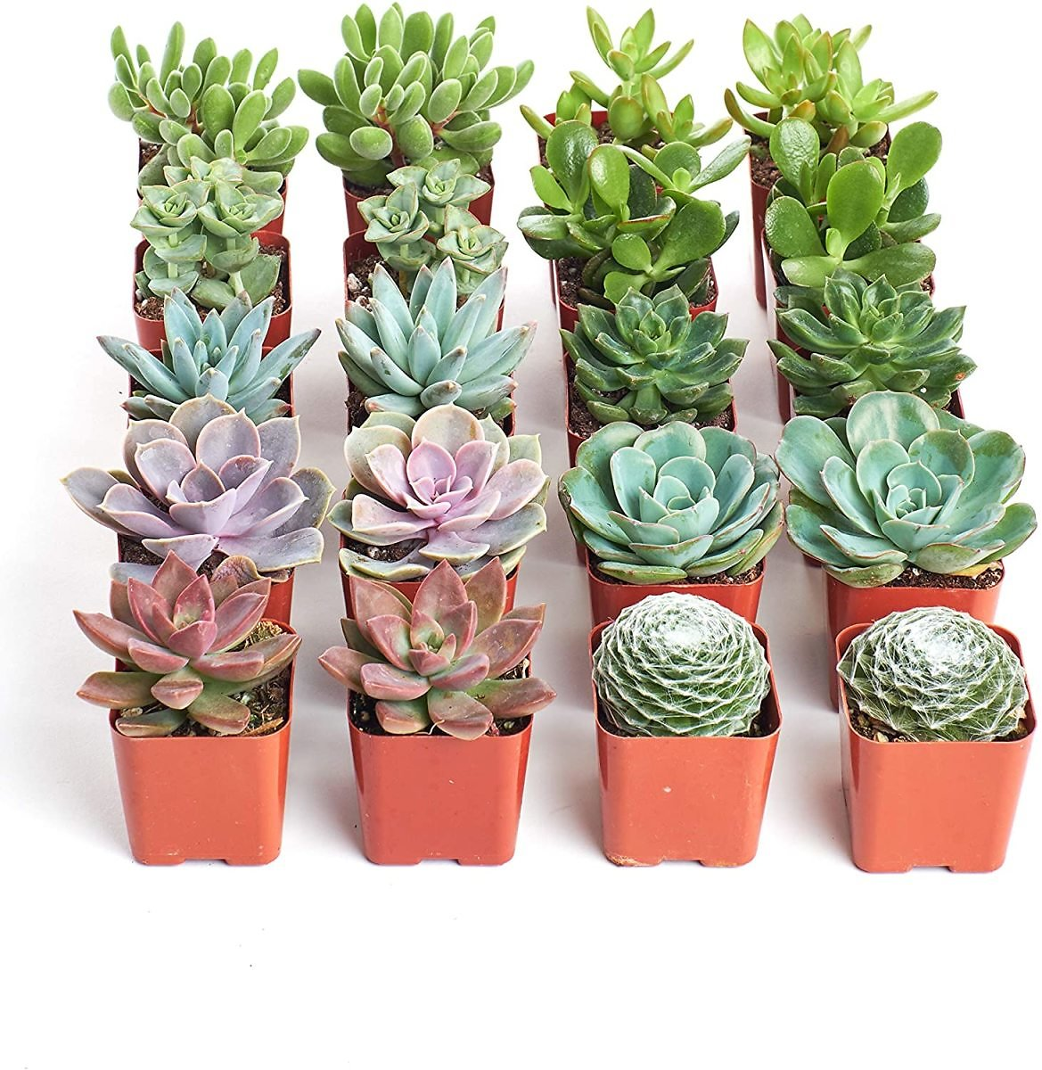 Save Up to 25% Off Shop Succulents Plants (Today only )