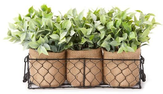 Chicken Wire Potted Greenery