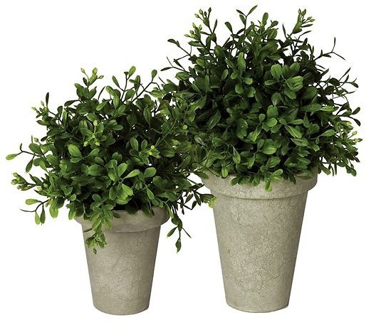 Potted Boxwood Orb - Set of Two