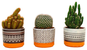 Cactus in Southwest Inspired Clay Pot, 3-pack