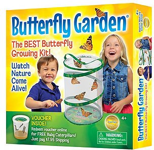 Insect Lore STEM Educational Butterfly Life Cycle Growing Kit & Reviews - Home