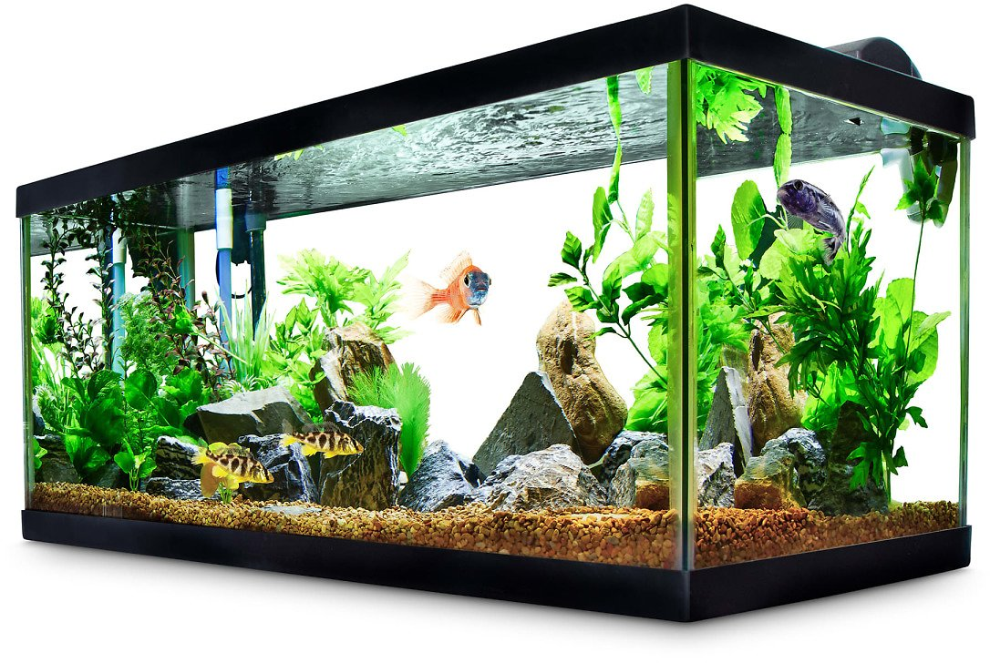 Aqueon Standard Glass Aquarium Tank 40 Gallon Breeder | Petco