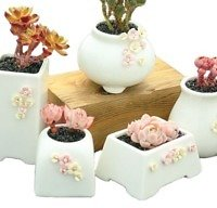 Source Wholesale Mini Custom Ceramic Flower Pot On M.alibaba.com