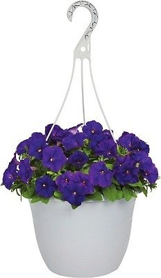 1.5-Gallon Hanging Baskets (In-Store)