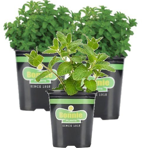 Live Herb Plants from $3.98