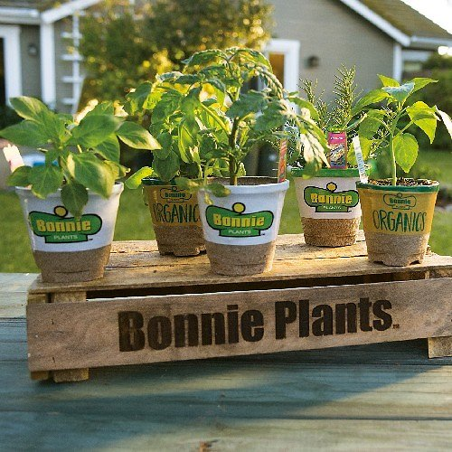 3 for $10 Bonnie Plants (In-Store)