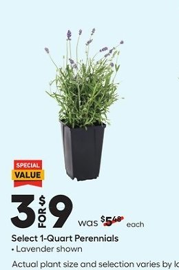 Buy 3 for $9 1-Quart Perennials (In-Store)