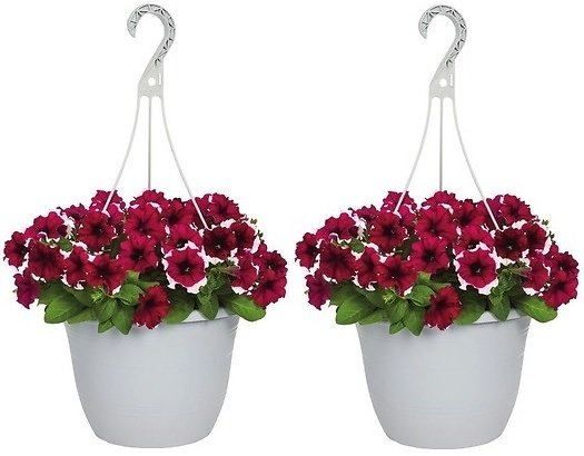 2 for $15 Hanging Baskets (In-Store)