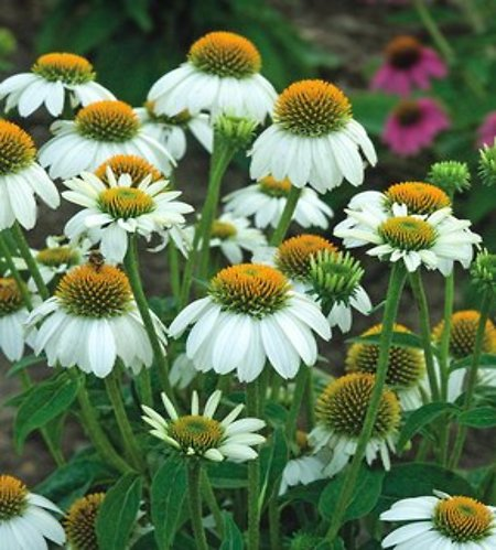 Up To 40% Off Gardening & Plants