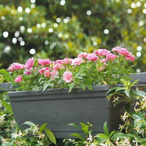 Up to 50% Off Planters & Flower Pots
