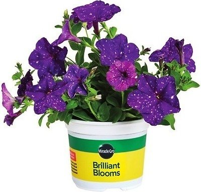 3 for $12 Miracle-Gro Brilliant Blooms (In-Store)