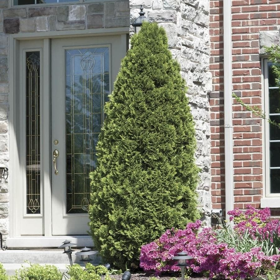 Up to 30% Off Bare Shrubs & Hedges