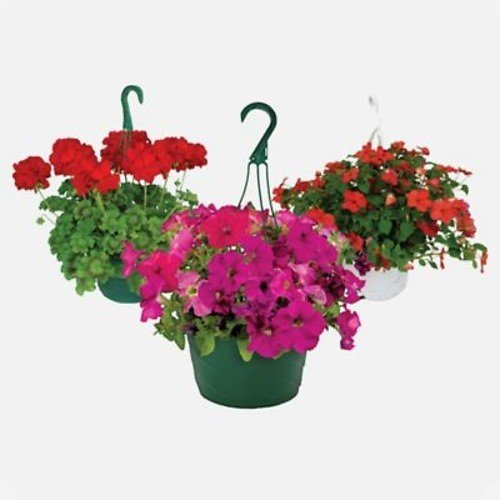$8.99 Hanging Baskets (In-Store)