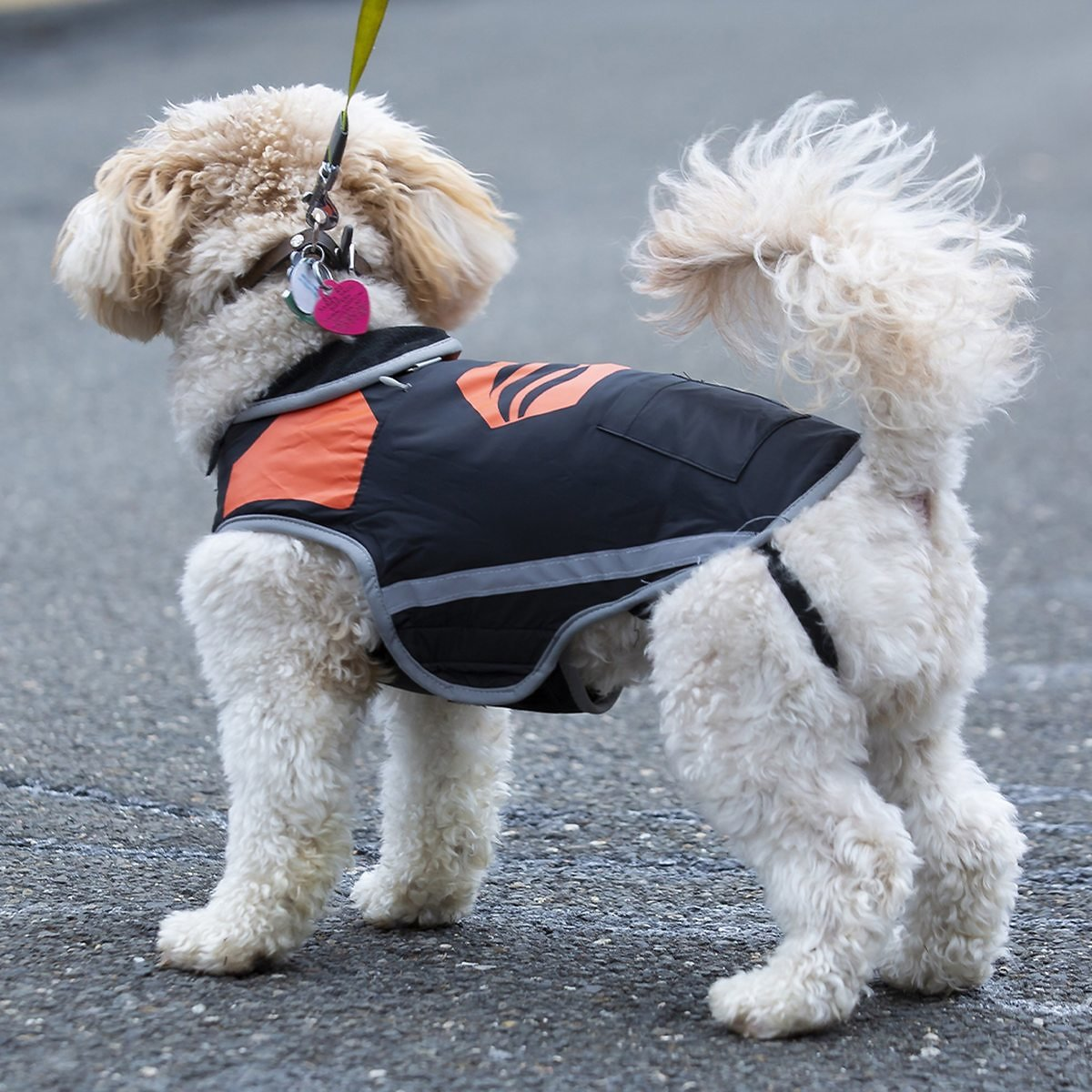 Washable Heated Dog Vest with Rechargeable Battery