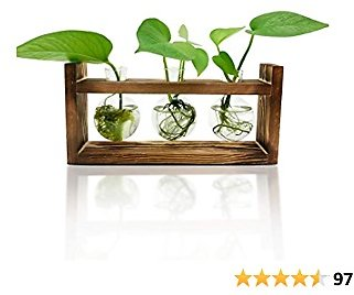 Plant Terrarium with Wooden Stand(3 Bulb Vase) Desktop Air Planter Bulb Glass Vase with Retro Solid Wooden Stand for Hydroponics Home Garden Office Decoration