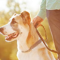 4 Frugal Tips Every Pet Owner Needs to Know