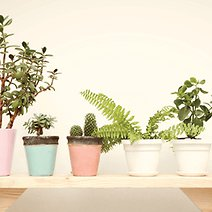 7 Easy Ways to Add Plants to Any Small Space