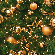Best Places to Get Your Christmas Tree