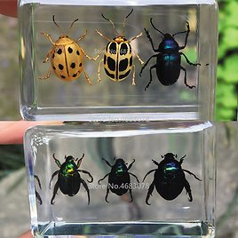 US $4.49 30% OFF|1piece Scarab Insect Specimen Ladybug Beetle In Clear Resin Educational Explore Instrument School Teaching Supplies 44x29x18MM|Educational Equipment| - AliExpress