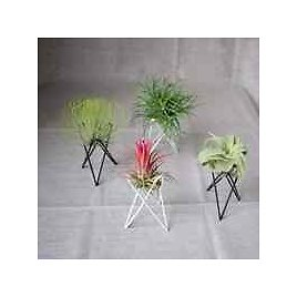 Source Simple Cheap Iron Wire Holder of Air Plant Tillandsia Plant Holder On M.alibaba.com