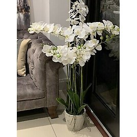 John Lewis Artificial Orchid Plant Potted Extra Large
