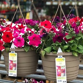 2 for $15 Hanging Baskets 1.5-Gal (In-Store)