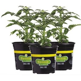 Bonnie Gallon Vegetable & Herb (In-Store)