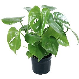 Houseplant Collectors Edition