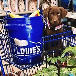 Lowes Last Chance Deals from $1