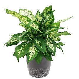 Up to 40% Off Select Costa Farms House Plants and Succulents