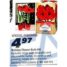 Holiday Flower Bulb Kit