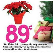 4 - 4.5-in. Potted Poinsettia