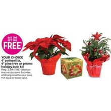BOGO FREE Holiday Plant Bulb Kit